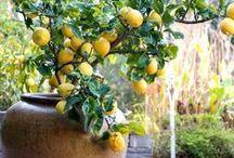 Growing Edible + DIY