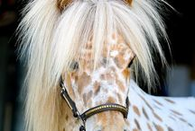 Laura's paarden / Hier staan allemaal paarden en pony's apart van alle dingen