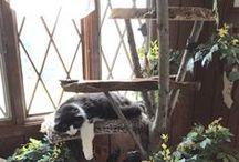 A Felines Forte