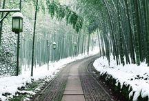 Travel Japan / Beautiful places