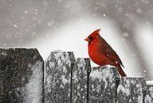 Winter cozy nature
