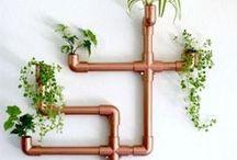 Indoor Gardening / Bringing your garden inside