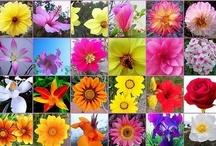 Flores de Bach / Las Flores de Bach se utilizan para tratar los estados emocionales de la persona de cara a resolver así la enfermedad física. La idea es tratar al individuo en vez de a la enfermedad.