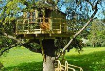 Wonderful tree houses