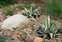 Drought resistant garden ideas