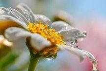 Bloesemremedies / Bloesemremedies bach flowers