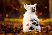 ˈAnəməl / #animals #adorable