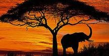 Safari adventures