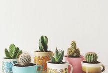 Catos, plantas e terrários