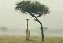 Wildlife / by Antoine Banzet