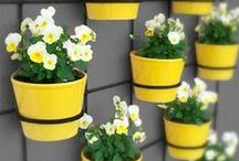 Window & Wall Pots / Garden #planters & wall #containers or #pots that are used to decorate & enjoy on walls, windows & hanging!