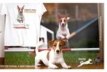 AGILITY DOG / Il momento migliore del tuo amico immortalato con l'Arte di SweetDog! Your pet's best moment immortalized with the SweetDog Art!
