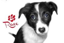 PUPPY LOVE / I suoi occhioni da cucciolo saranno sempre con te! -  It's big eyes will be always with you!