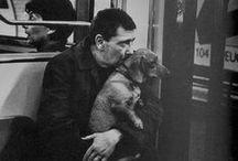 Our Beloved Pets / by Isabel Gonçalves