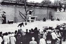 Dierenpark Wassenaar Zoo