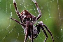 ~*~Charlotte's Web~*~ / The creepy-crawly world of Arachnids