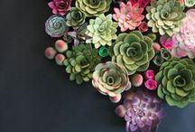 Plants | Cactus & Succulents / Cactus and Succulents are the prettiest plants ever.