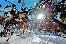 Sault Ste. Marie Winter Wonderland / by Sault Ste. Marie Convention & Visitors Bureau