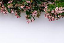 B L O O M / FLOWERS / by Skye McAlpine