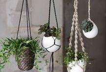 makrame plant hangers