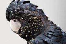 Dark Birds / My Main Source of Inspiration