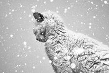 Schnee Fotografie / Winterwonderland! Genau das richtige Wetter um mit der Kamera raus zu gehen!