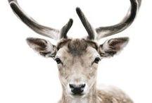 ANIMALS  beautiful!!