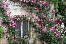 Jardines! / Ideas para jardines