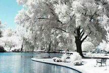 Winter wonderland / A winter wonderland