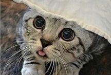 Cats / Cute Cats <3