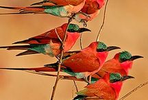 Birds of a feather / Colorful birds
