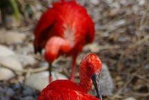 BIRD PAIRS / Birds in pairs