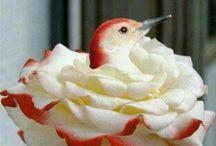 Hummingbirds plus