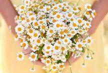 WEDDING soft flowers