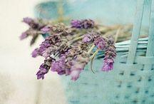 Lovender / Love+lavender=Lovender :)