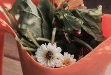 My Beautiful Flowers Summer 2015 / Shediac NB,