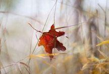 * Inspirations d'automne... * / L'automne est là! Les arbres se parent progressivement de superbes couleurs et la nature offre au visiteur un spectacle grandiose.L'automne rime également avec belle lumière. L'inclinaison des rayons du soleil en cette période de l'année permet de bénéficier d'une lumière douce qui met bien en valeur les sujets. Toutes les conditions étant réunies, il serait bien dommage de ne pas en profiter pour prendre de belles photos et faire un album photo avec Picthema. http://www.picthema.fr/