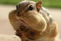 Funny animals / http://www.9hoho.com / by 999gag