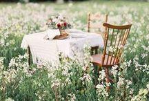 Summer time / Sun,flowers ...