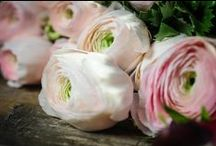 Wedding rose palette / Wedding inspiration
