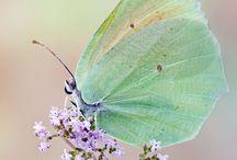 Butterflies & their beauty