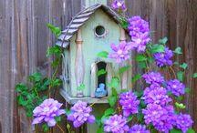 Birdhouses / Fly birdy fly