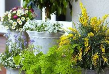 Gardening Tips / See it grow