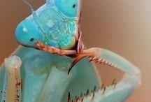 cool mantises