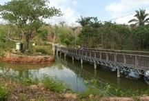 Lagoa dos Primatas - Zoobotânico de Teresina  / Zoobotânico de Teresina – Lagoa dos Primatas