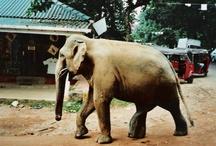 Srí Lanka - part 2