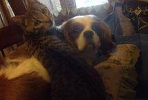 cat and dog cane e gatto