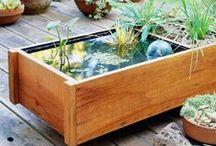 garden / mini pond