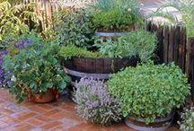 garden / small herbgarden