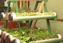 garden / small vegetable garden